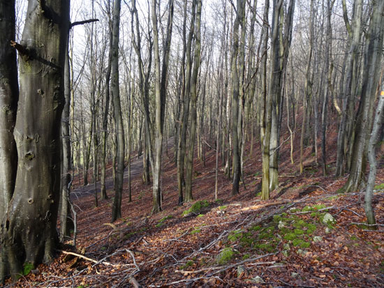 Featured woodland for sale