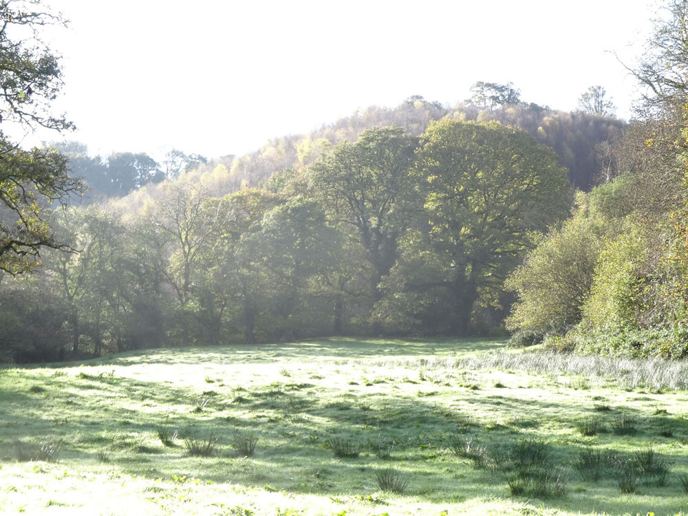 Moonlight Wood, Cwmcych (near Newcastle Emlyn), Pembrokeshire. 5.43 acres of maturing waterside broadleaves for £41,000 (freehold)