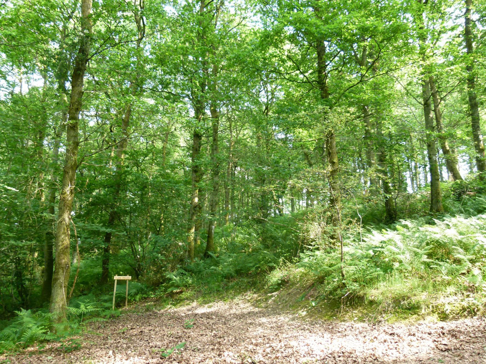 Dean Wood, 3.5 acres of mature oak woodland near to the town of Knighton, Powys for £38,000 (freehold)