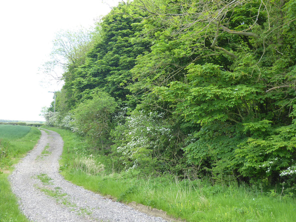 St John's Wood, Ulgham, Northumberland. 4.69 acres of maturing hardwoods for £38,000 (freehold)