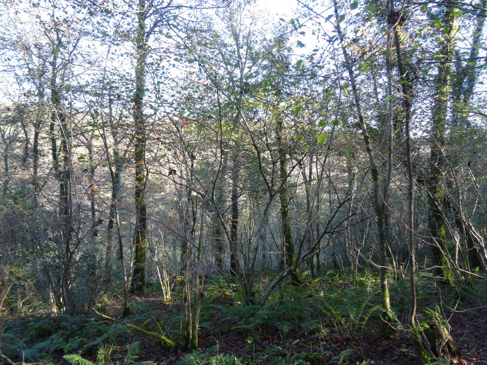 Dygoed Wood, Cwmcych (near Newcastle Emlyn), Pembrokeshire. Mature and maturing broadleaves in a beautiful South Wales valley. 4.13 acres for £23,000 (freehold)