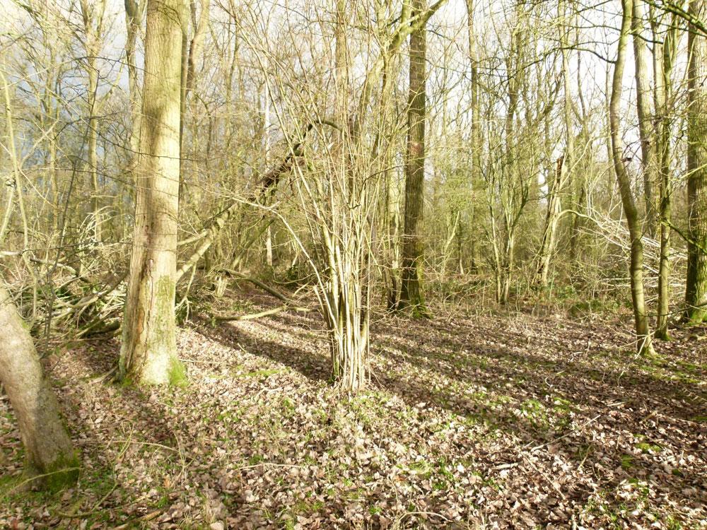 Woodland For Sale Pail Wood 4 37 Acres Of Oak Woodland