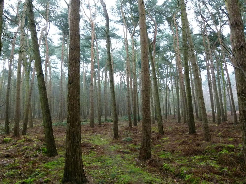 Twemlows woods