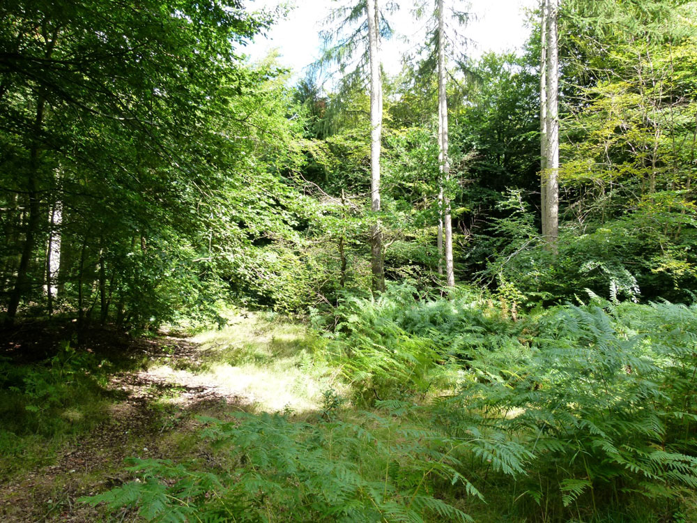 Woodland For Sale Trappist Wood 4 35 Acres Of Chiltern