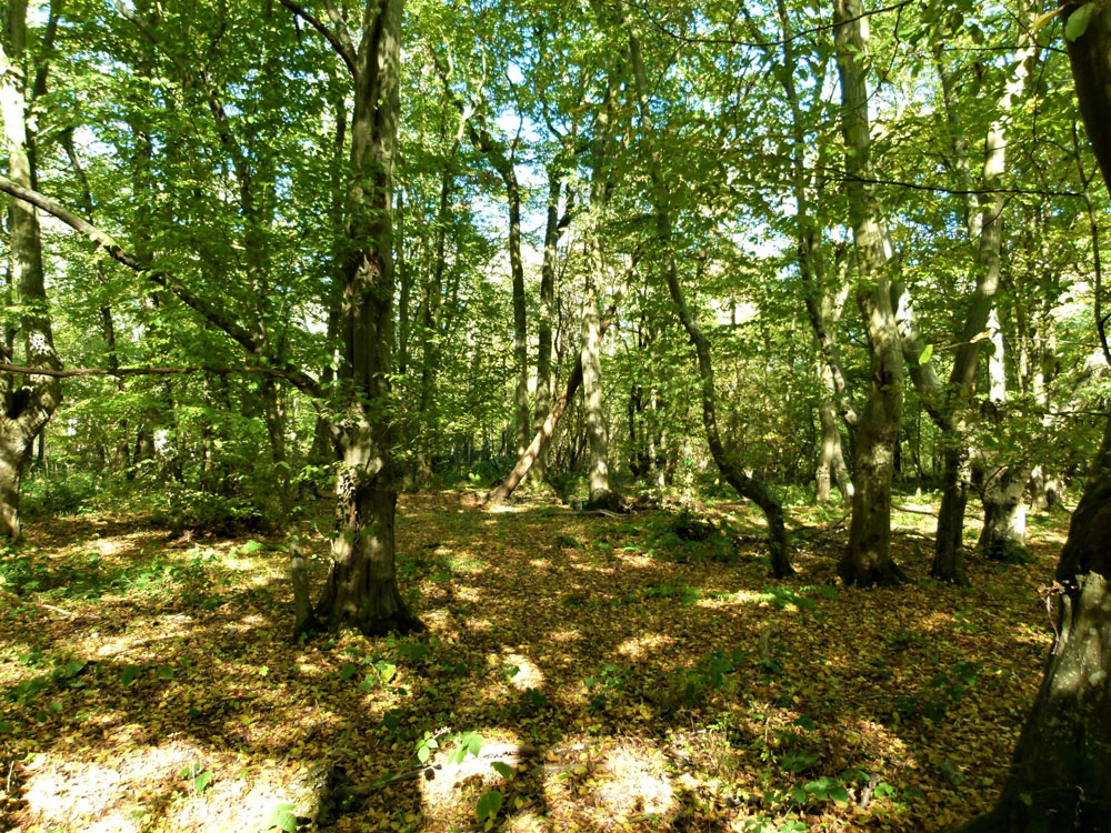 Woodland for Sale