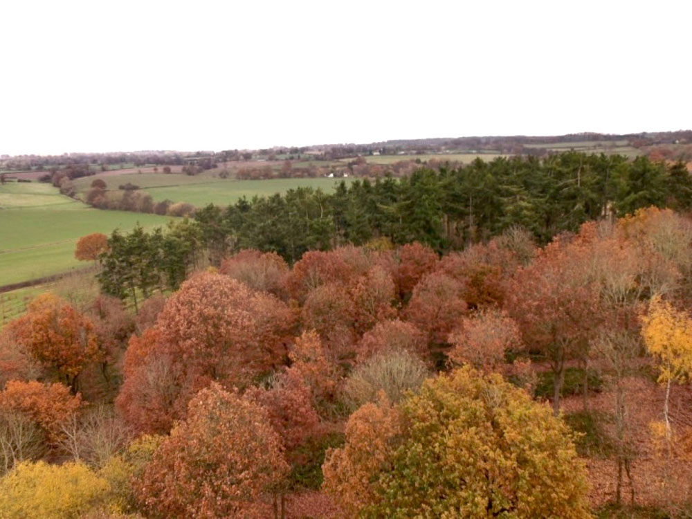 Spindle Wood, 1.87 acres of mature oak with a smattering of ash, located near Kinnersley in the Herefordshire countryside £24,000 (freehold)