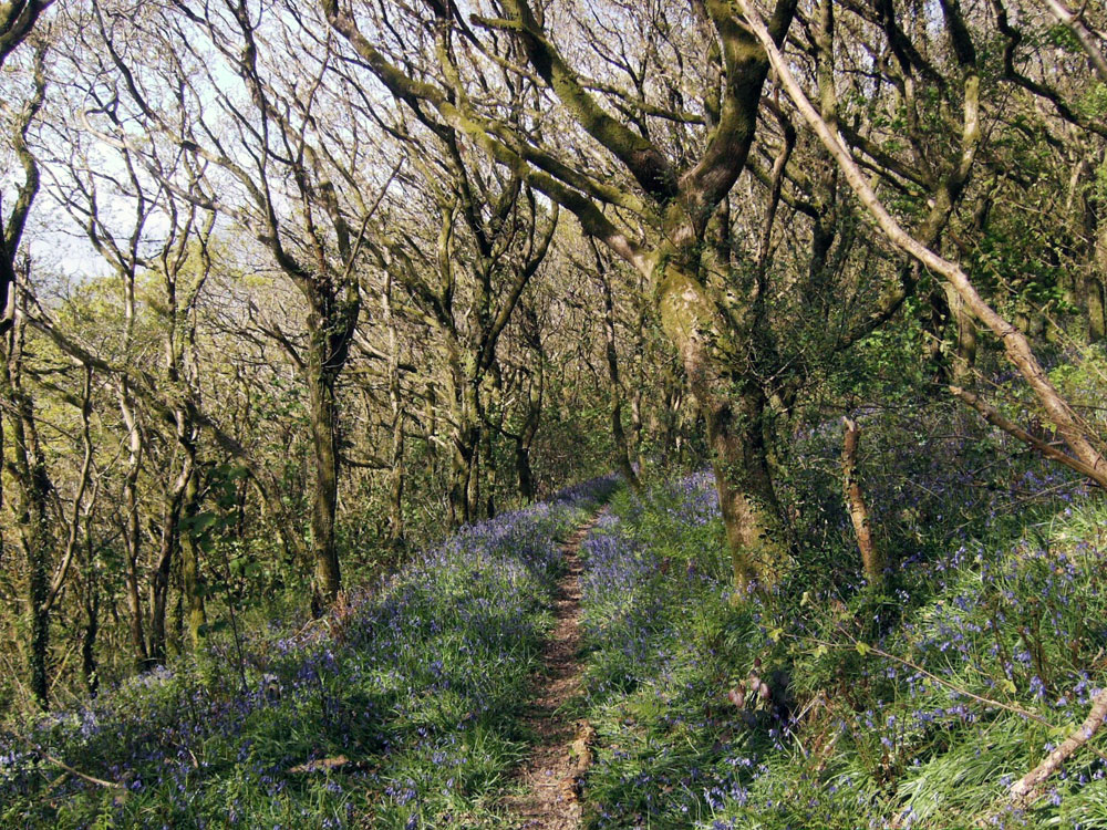 Coed Rhyal, Burry Port, between Llanelli and Kidwelly, Carmarthenshire, 13.33 acres of mature oak woodland. £44,000 (freehold)