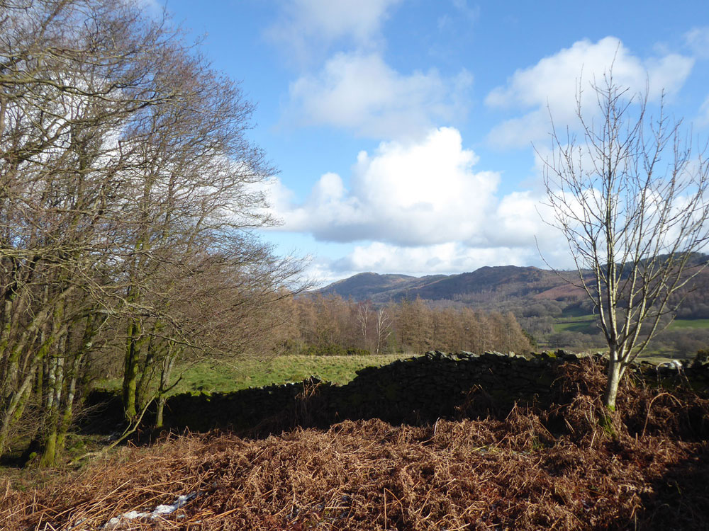Hefthill Wood, Newby Bridge, Cumbria. A charming mixed wood in rolling south lakes countryside. 7.87 acres freehold for £76,000