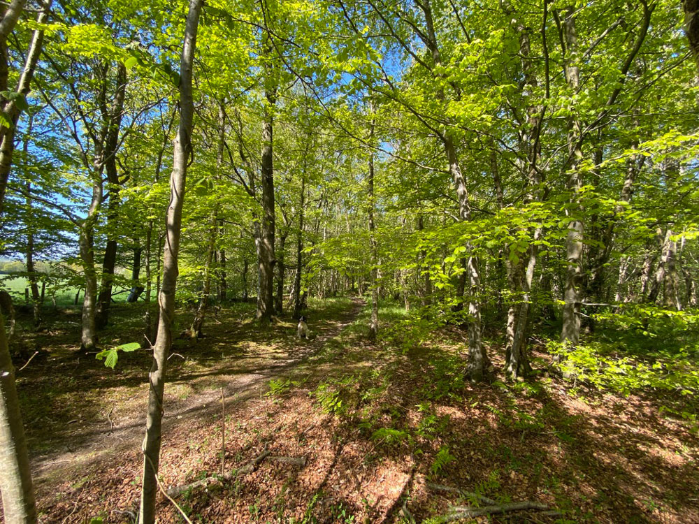Broad Wood, Coylton, Ayrshire. Mature mixed broadleaf woodland. 27.07 acres freehold for £118,000, or in 4 lots from £12,000