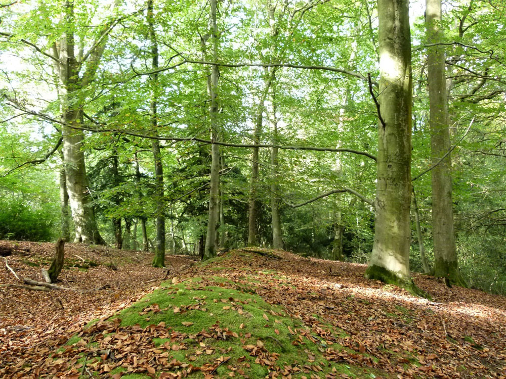Bishops Copse, near Crowborough, East Sussex. 1.71 acres of magnificent mixed woodland with vehicular access, 40 miles from London for £25,000 (freehold)