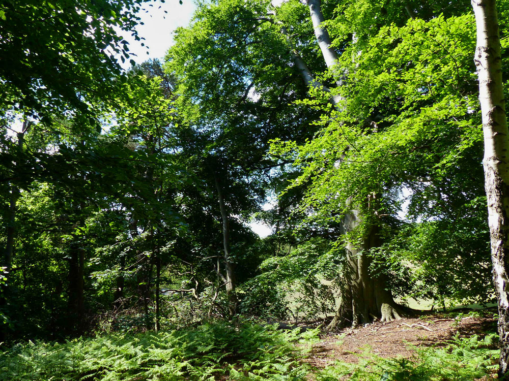 Halter Wood, a very attractive mature mixed broadleaf woodland with a stream, near Delamere Forest in the Cheshire countryside, 3.47 acres for £65,000 (freehold)