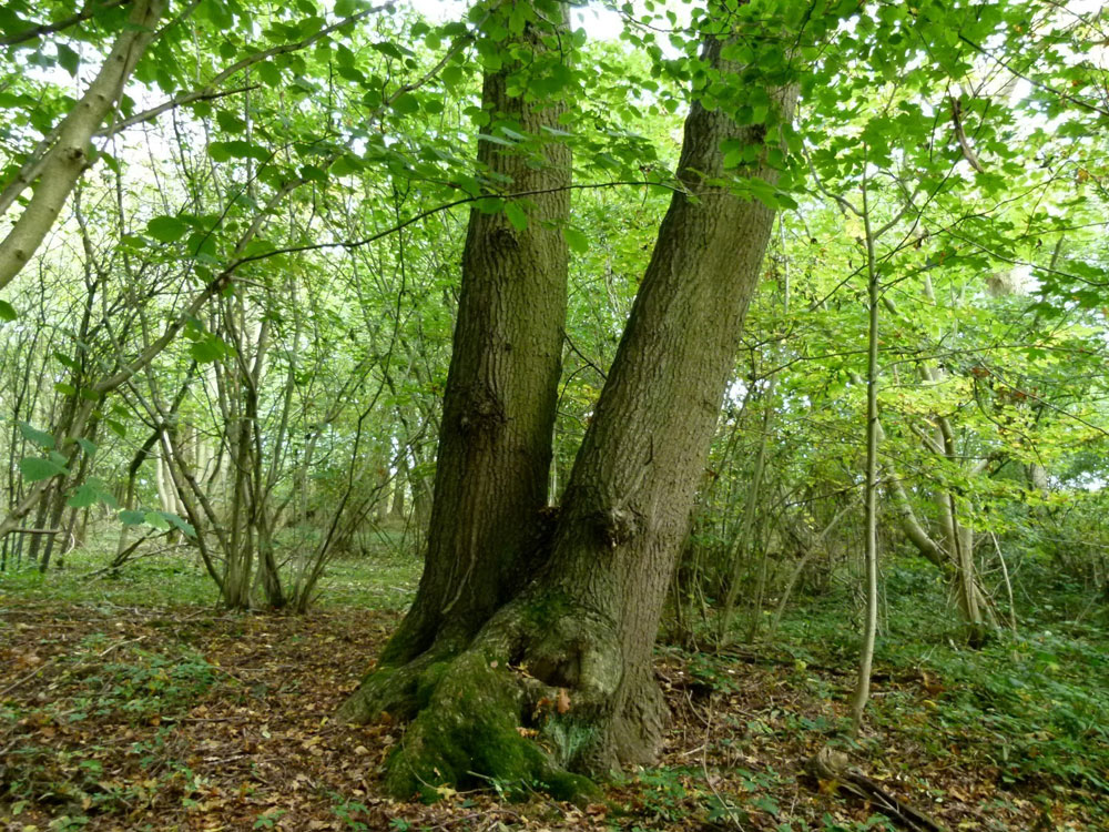 Hoppers Wood, Eakring, near Mansfield and Newark in the county of Nottinghamshire. 0.68 acres of mature broadleaved woodland for £11,000 (freehold)