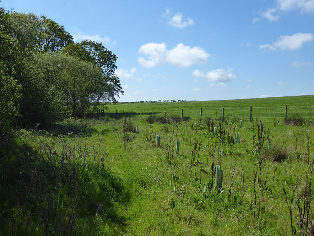 Anvil Wood, Widdrington, Northumberland. Young mixed broadleaves 20 minutes north of Morpeth. 3.86 acres freehold for £28,000