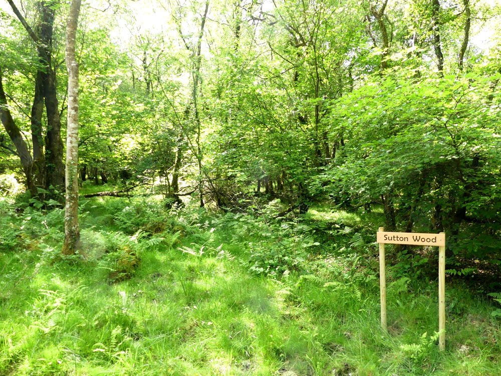 Sutton Wood, near Tiverton, Devon. 2.86 acres of mixed mature hardwood with excellent access. £32,000 (freehold)