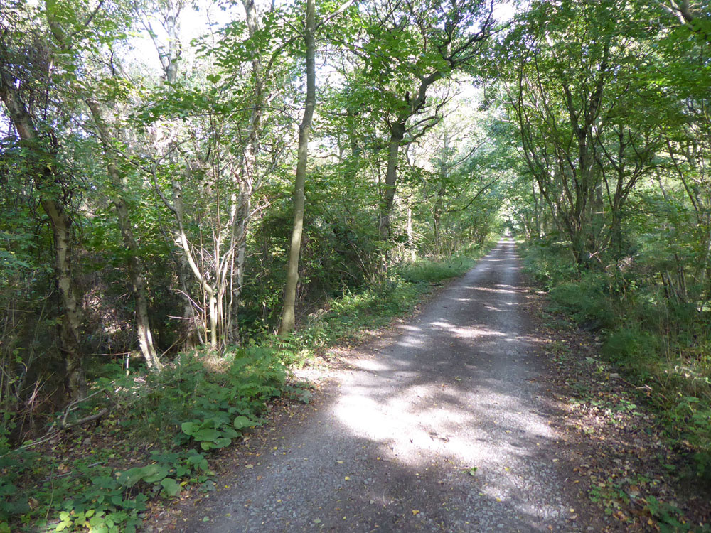 Percy's Copse, Stocksfield, Northumberland. Full canopy broadleaves near the middle of a large private woodland just half an hour from Newcastle city centre. 7.73 acres for £64,000 (freehold)