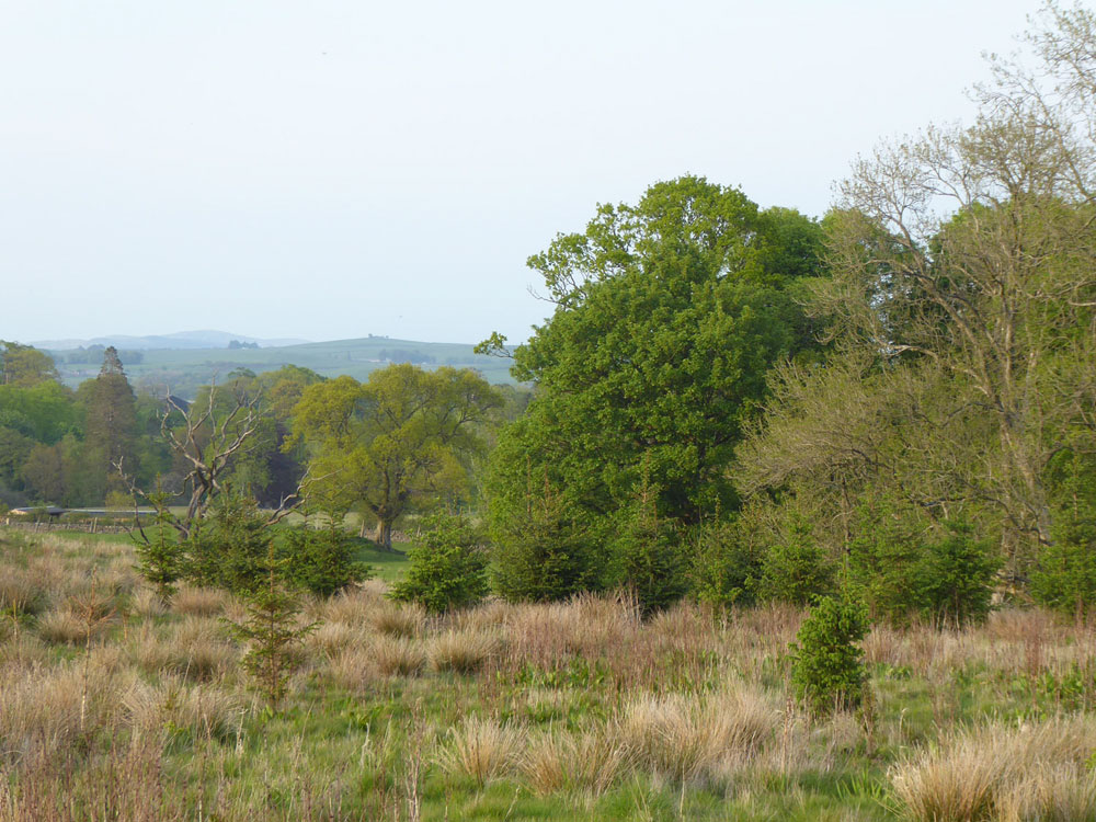 Craigview, Castle Douglas, Dumfries and Galloway. A plateau of open ground in a most attractive agricultural landscape. 2.77 acres for £19,500 (freehold)