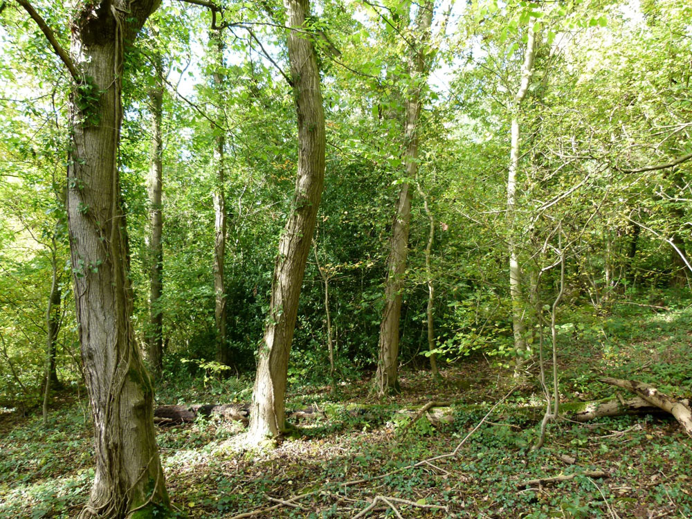 Parson Wood, Eakring, near Mansfield and Newark in the county of Nottinghamshire. 2.65 acres of broadleaved woodland for £32,000 (freehold)