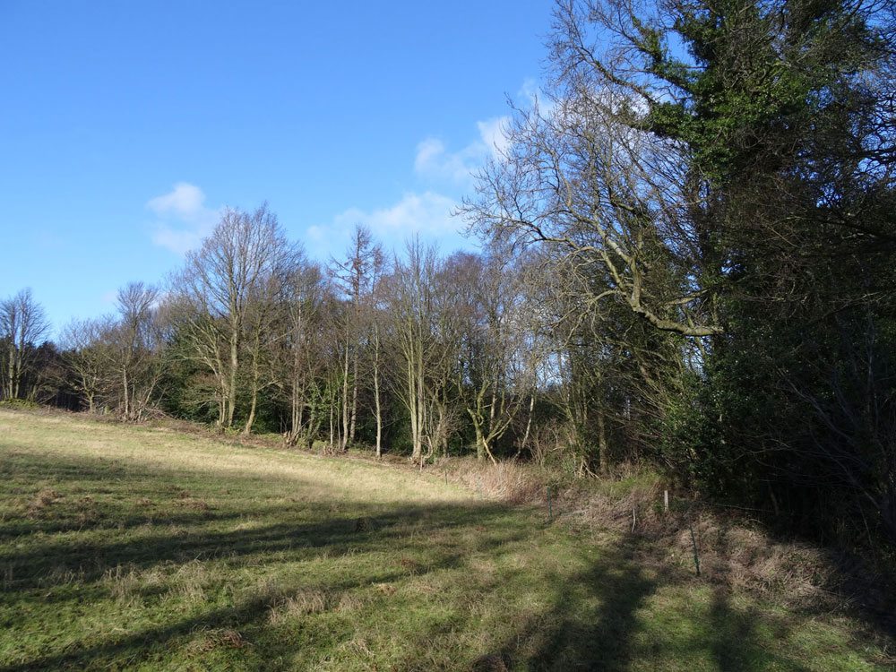 Harrison Wood, Chapeltown, South Yorkshire. Mixed woodland overlooking a rural landscape 4 miles north of Sheffield. 1.41 acres for £19,500 (freehold)