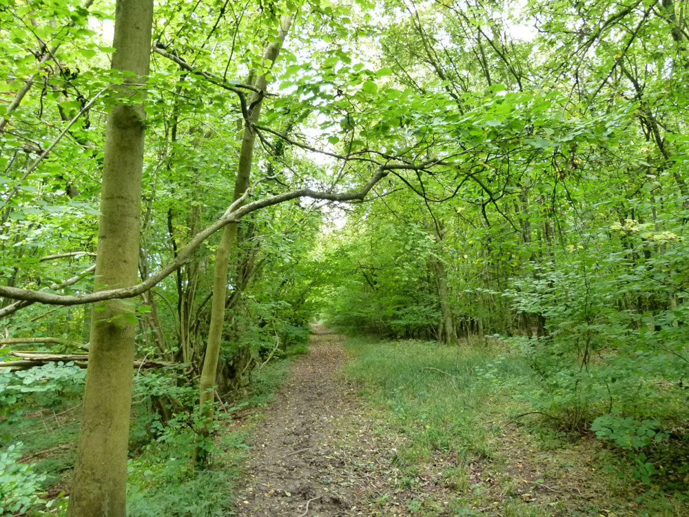 Buffers Wood, near Winchester, Hampshire. 5 acres of lovely conifer and broadleaf woodland in a rural location, 12 miles from Winchester. £85,000 (freehold)