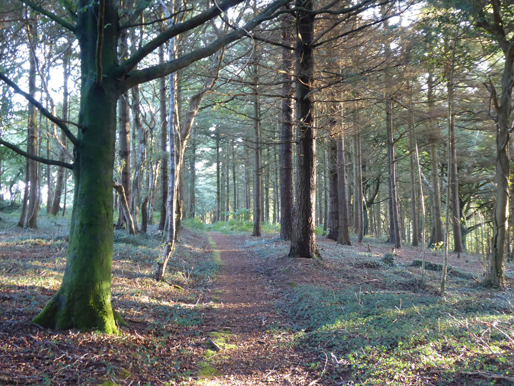 Mawgan Wood, Gweek, Cornwall. A bright mixed woodland above the upper reaches of the Helford Estuary. 6.98 acres for £60,000 (freehold)