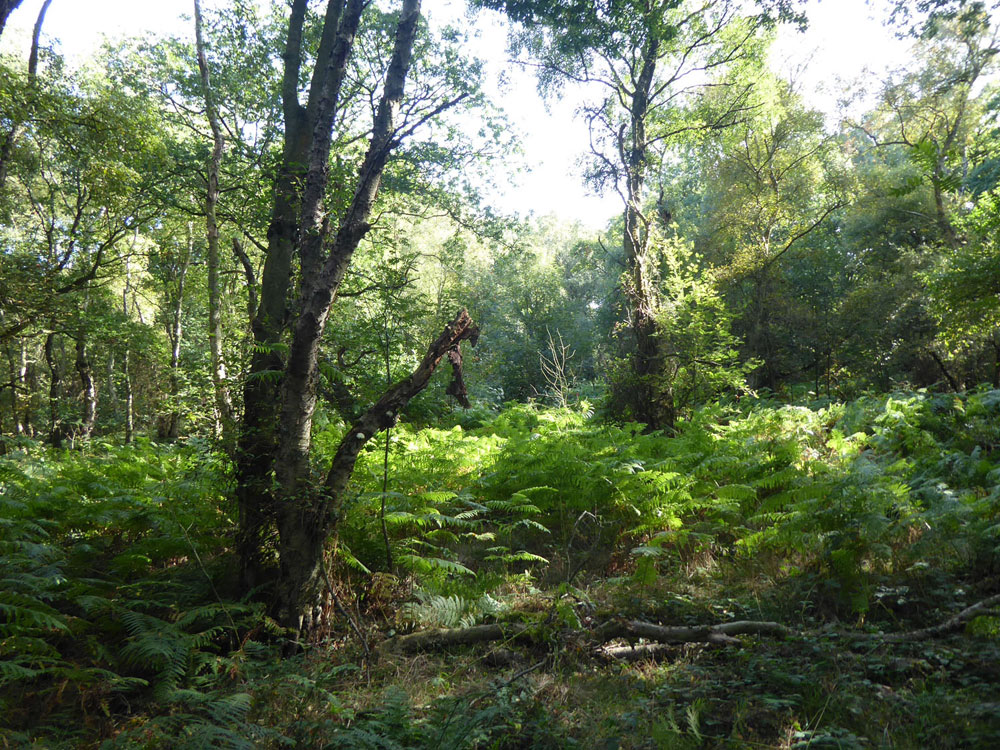 Bainton Copse, Stocksfield, Northumberland. Secluded broadleaves within a larger gated woodland half an hour from Newcastle city centre. 1.95 acres for £26,000 (freehold)