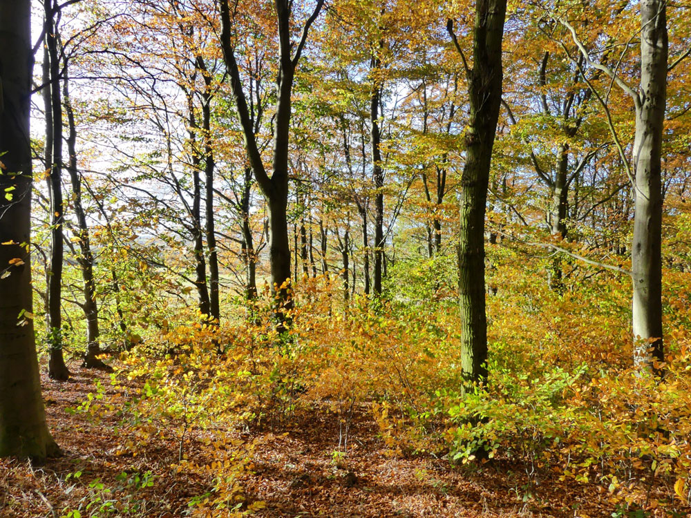 Redbrook Wood, a mixed age deciduous woodland in a quiet location near Barnburgh, South Yorkshire, 2.65 acres for £35,000 (freehold)
