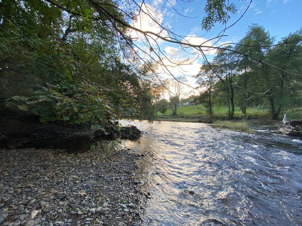 Dolrhyd Wood, Llanfair Caereinion, near Welshpool. An exceptional mature broadleaved woodland with river frontage and fishing rights 9.36 acres for £115,000 (freehold)