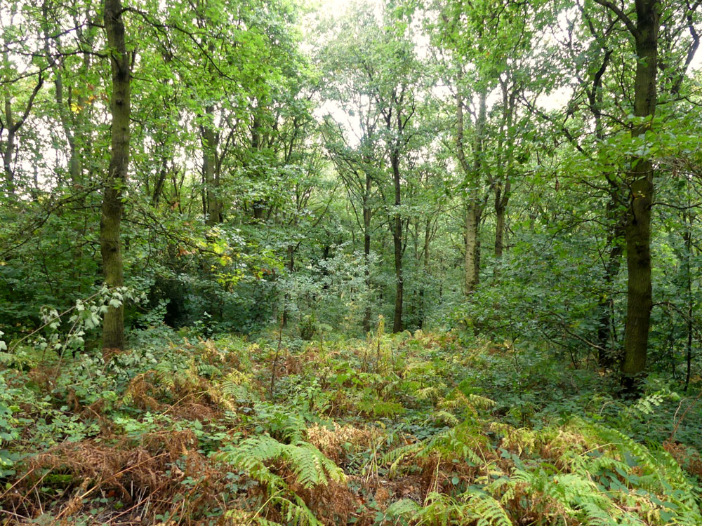 Colliery Wood, a broadleaf woodland in a quiet location near Barnburgh, South Yorkshire, 1.62 acres for £19,000 (freehold)