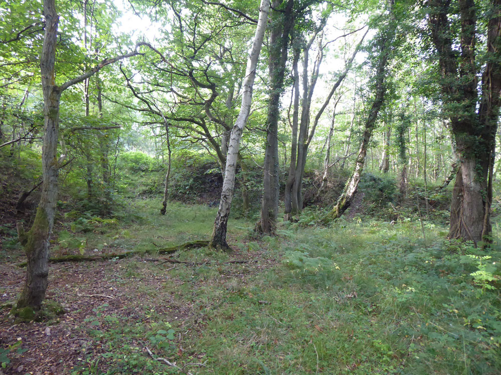 Lumleys Copse, Stocksfield, Northumberland. Broadleaves and glades within a larger gated wood half an hour from Newcastle city centre. 3.17 acres for £38,000 (freehold)
