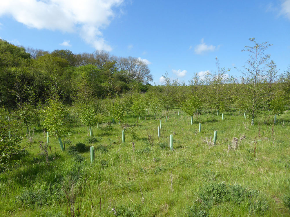 Druridge Wood, Widdrington, Northumberland. Young mixed broadleaves 20 minutes north of Morpeth. 7.1 acres freehold for £49,000