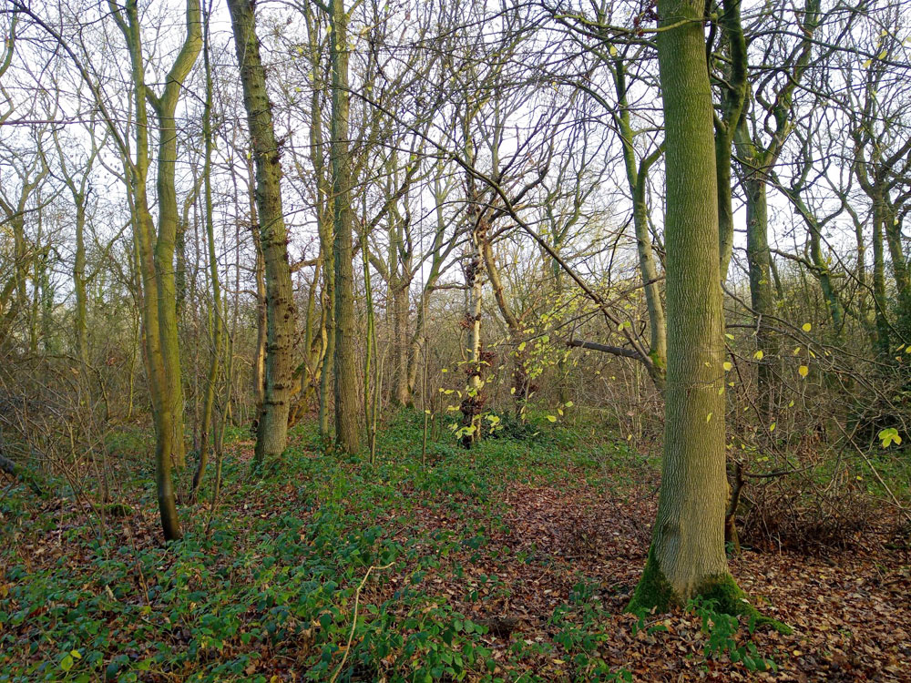 Outlookers Wood, Eakring, near Mansfield and Newark in the county of Nottinghamshire. 3.22 acres of broadleaved woodland for £46,000 (freehold)
