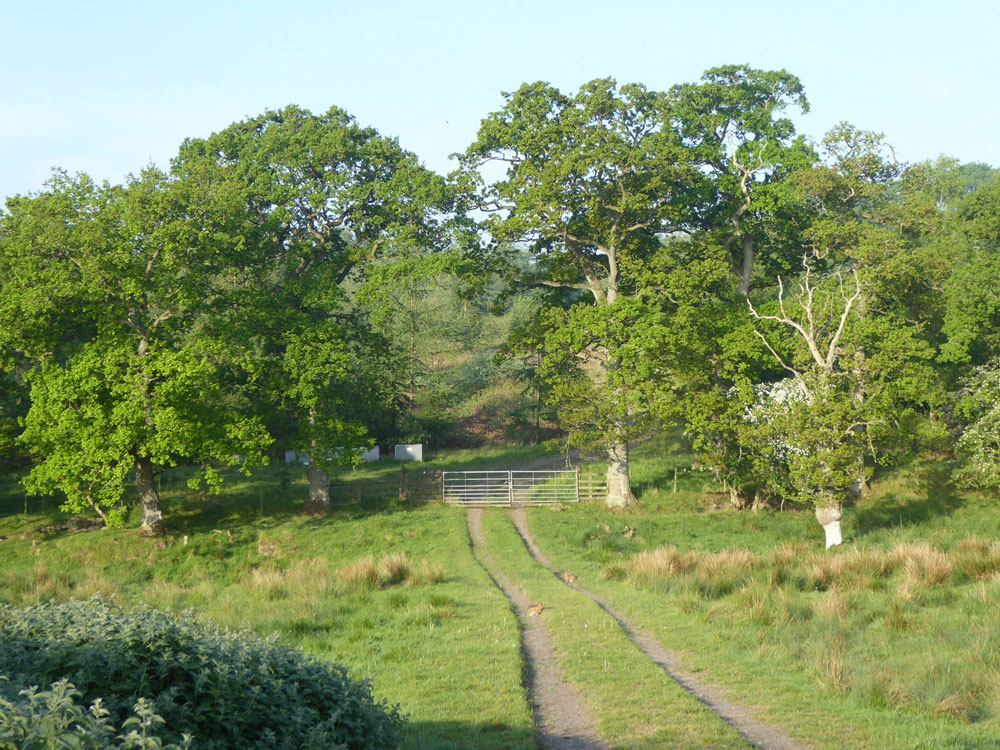 Verdant Copse, Longhorsley, Northumberland. A mixed wood of mature oak, thicket stage larch and young mixed broadleaves. 2.09 acres freehold for £44,000