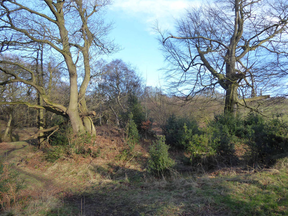 Pottsden Wood, Stocksfield, Northumberland. An extensive and private broadleaf woodland half an hour from Newcastle city centre. 14.13 acres for £87,500 (freehold)