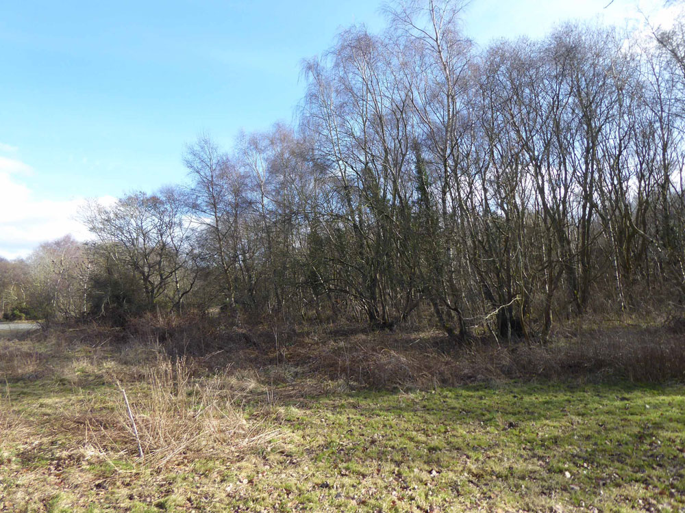 Silvers Copse, Stocksfield, Northumberland. A private and affordable stand of broadleaves in a larger gated wood. 1.61 acres for £17,500 (freehold)