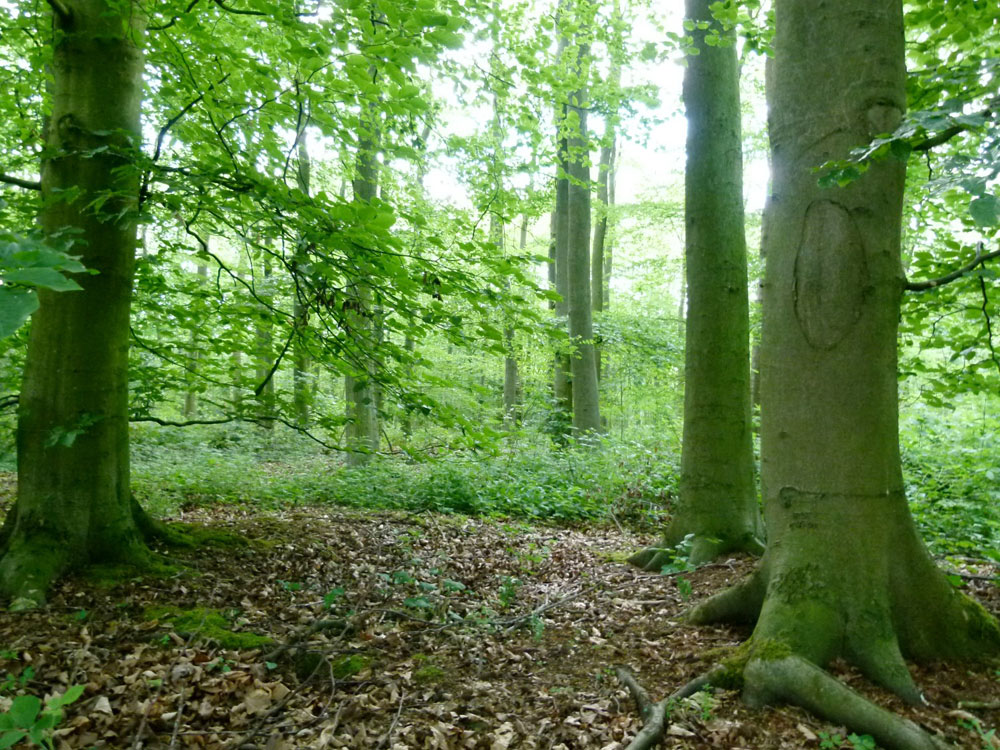 Seville Wood, Eakring, near Mansfield and Newark in the county of Nottinghamshire. 4.04 acres of broadleaved woodland for £51,500 (freehold)