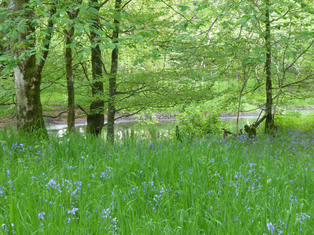 Balmaghie Pond, Castle Douglas, Dumfries & Galloway. A varied and private amenity woodland extending to 3.63 acres for £41,000 (freehold)