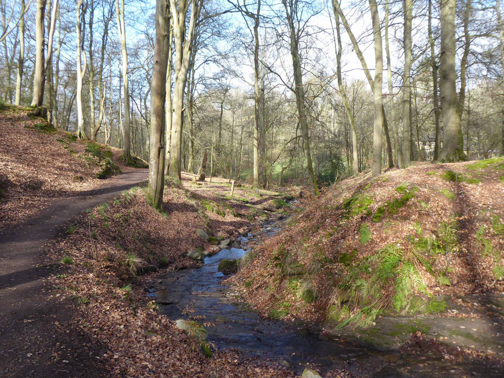 Scone Den, Scone, Perthshire. Mature broadleaves in an edge-of-village setting. 10.25 acres freehold for £105,000