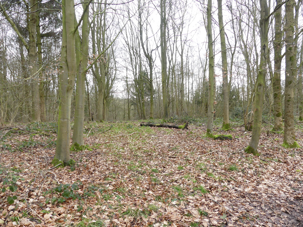Blusher Wood, Eakring, near Mansfield and Newark in the county of Nottinghamshire. 4.02 acres of broadleaved woodland for £53,000 (freehold)