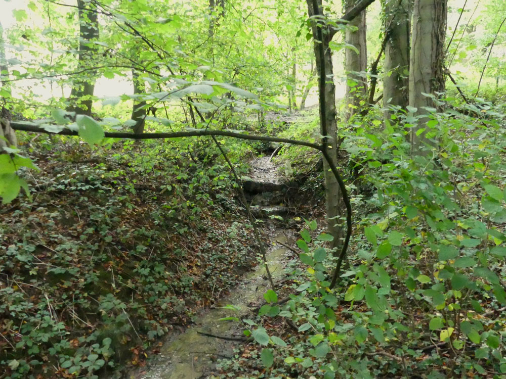 Cotton Wood, a mature mixed broadleaf woodland at the end of a private track, near Barnburgh, South Yorkshire. 1.56 acres for £21,000 (freehold)