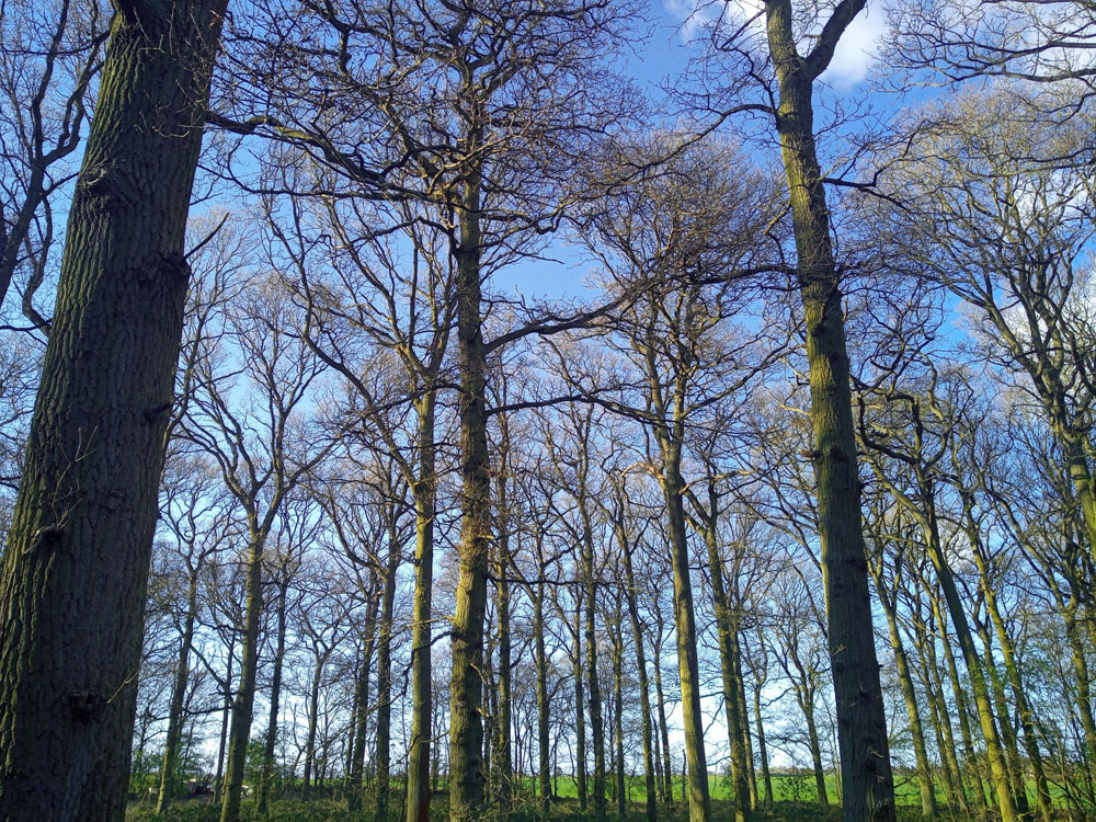 Deepdale Corner, near Sandy, Bedfordshire. 2.53 acres of mature broadleaved woodland, 13 miles from Bedford. £41,000 (freehold)
