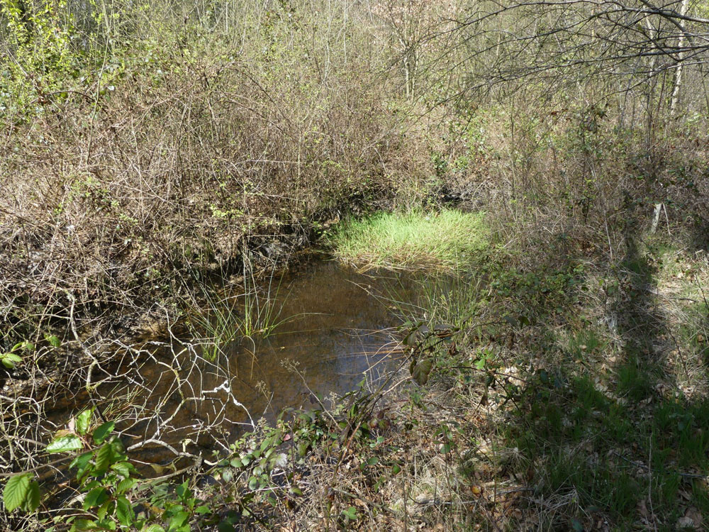 Colley Wood, near Tiverton, Devon. 3.11 acres of mixed mature hardwood with excellent access. £45,000 (freehold)