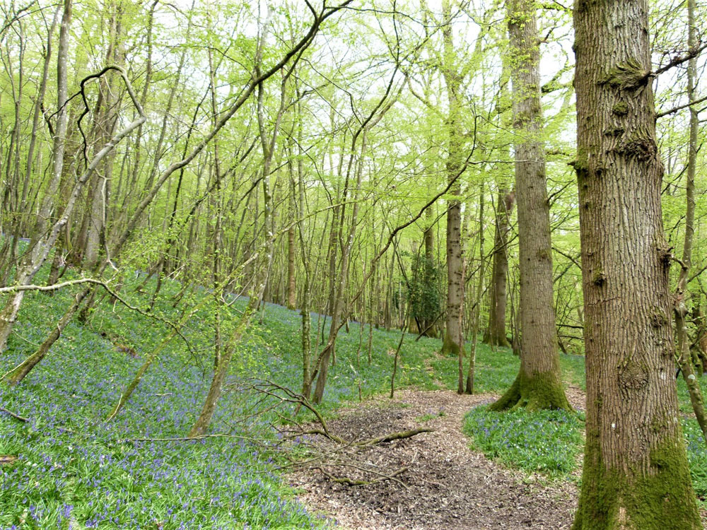 Cranny Copse, near Hurst Green, East Sussex. 2.22 acres of glorious broadleaf woodland next to a winding stream, 9 miles from Hastings. £41,000 (freehold)