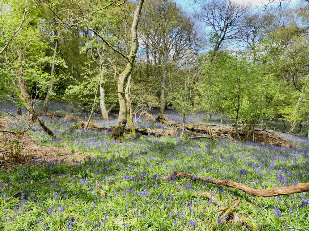 Rolling Log Wood, near Telford, Shropshire. 2.24 acres of outstanding broadleaf woodland for £35,000 (freehold)