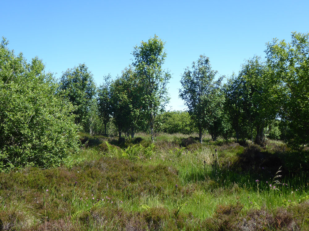 Folds Copse, Springfield, near Aberchirder, Aberdeenshire. 5.40 acres of young woodland and open ground for £34,000 (freehold)