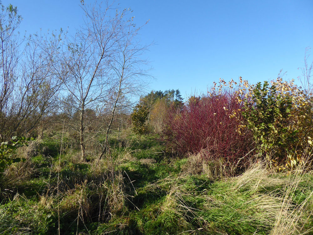 Knowes Copse, Springfield, near Aberchirder, Aberdeenshire. 3.84 acres of young mixed broadleaf planting for £26,000 (freehold)
