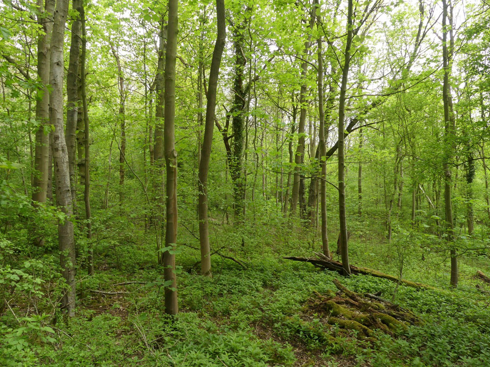 Coven Wood, Eakring, near Mansfield and Newark in the county of Nottinghamshire.  3.21 acres of broadleaved woodland for £42,000 (freehold)