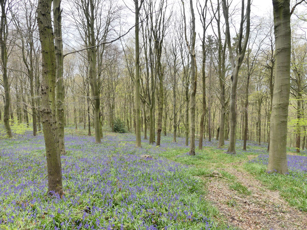 Wath Wood, 2.87 acres of deciduous woodland in a quiet location near Barnburgh, South Yorkshire, for £38,000 (freehold)