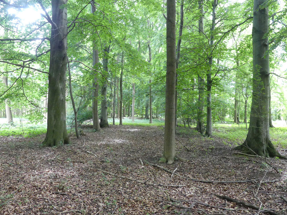 Orchid Wood, 20.63 acres of mixed broadleaves and pine at Broughton, near to Scunthorpe in Lincolnshire. Offers in excess of £125,000 (freehold)