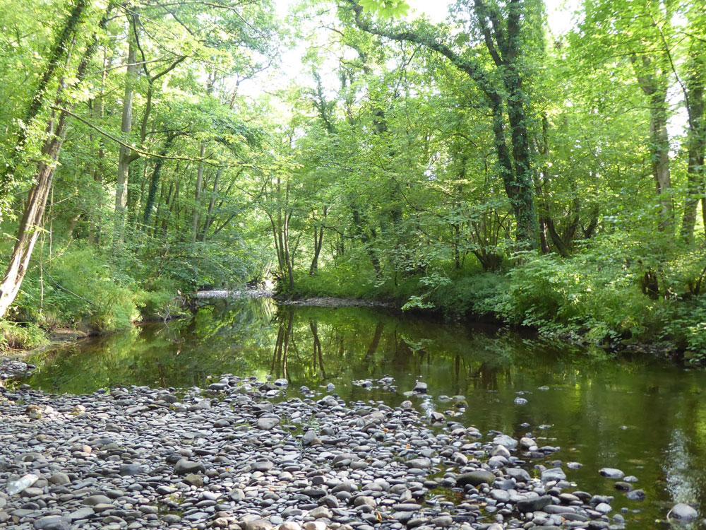 Coed Gelli, Newbridge, nr. Llangollen, Wrexham. 14.46 acres of mixed woodland for £140,000 (leasehold)