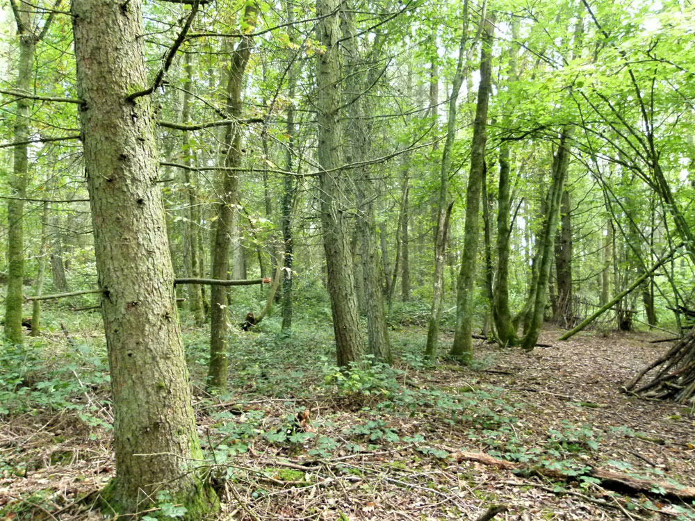 Whisperers Wood, near New Alresford, Hampshire. 4.82 acres of conifer and broadleaf woodland with road frontage, 12 miles from Winchester. £72,000 (freehold)